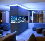 Аквариум в офисе – нестандартные и дизайнерские аквариумы в квартирах (в комнатах, в гостиных, встроенные в перегородки и стены), в офисах, в торговых центрах